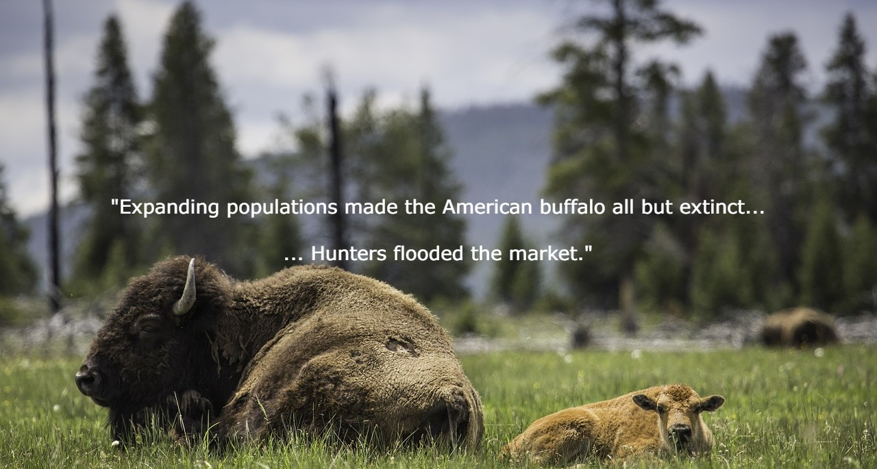 Outbound sales is like American Buffalo hunting